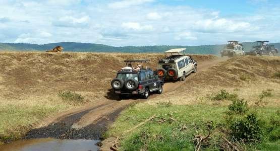 Top 3 des réserves animalières à visiter lors d'un voyage en Tanzanie image